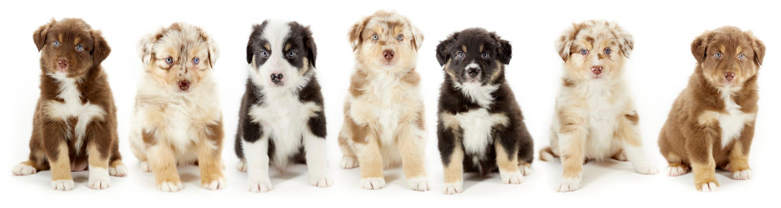 Puppypanorama